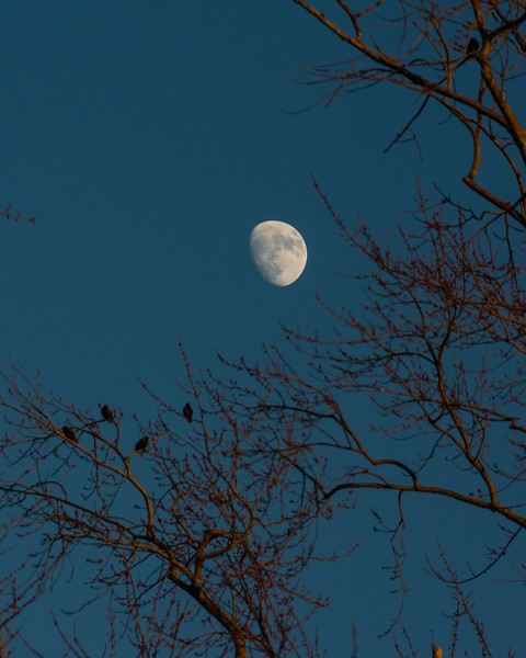 An Audience For The Moon