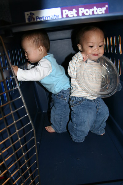 Playing in the dog kennel.