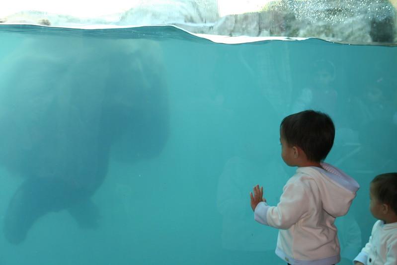 Both boys at the bear pool.