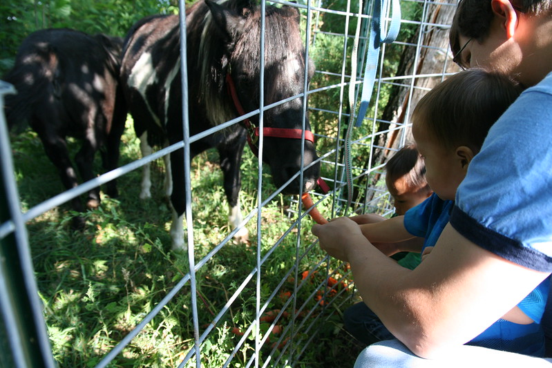 Getting more carrots.  (Photo taken by Shannon.)