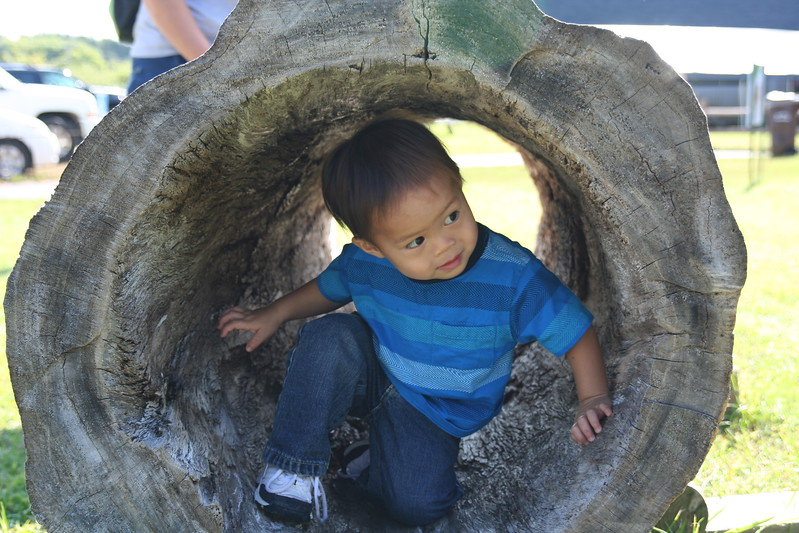 Matthew crawling through a log at the orchard.