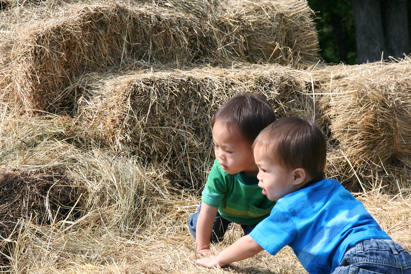 Climbing the haystack at the orchard.