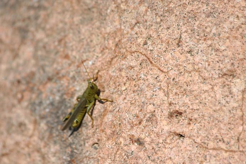 Grasshopper in the sun.