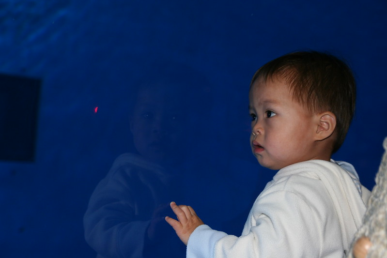 Matthew at the dolphin tank.