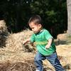 Nicholas in the hay.