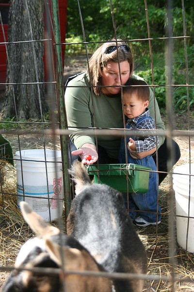 Matthew and his mommy trying to feed the goats.