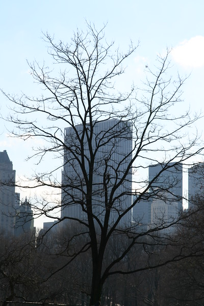 A barren tree in the park silouhetted against the skyline.