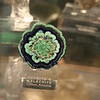 Another Azurite and Malachite sample in the Gallery of Gems and Minerals at the American Museum of Natural History.