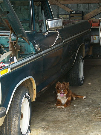 Coco laying beside Don's old truck while he works on it.