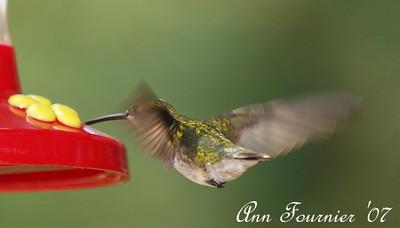 Hummingbird at feeder.