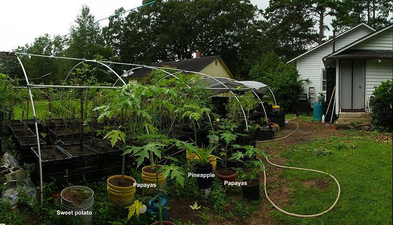 GardenPano9792
