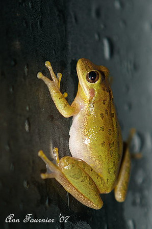 Small frog climbing on the window.