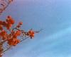 Gloriously grainy blossom burst