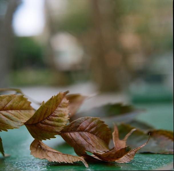 Autumn unfurled