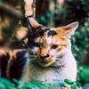 Bokehlicious feline