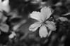 2016-07-28 - Hibiscus