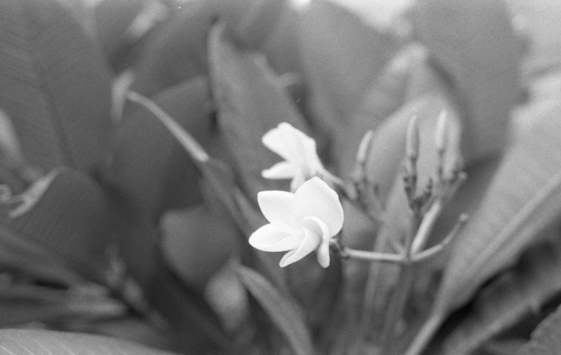 Nikon FT3 - Kodak 5222, 35mm Black & White Film @ ISO 200