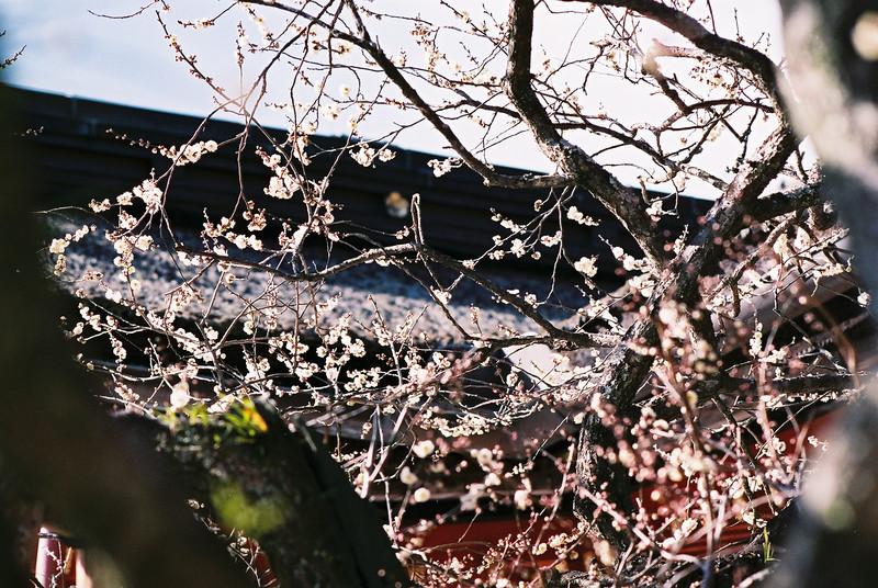 Nikon FT3 - Fuji Superia Premium 400, 35mm Colour Film @ ISO400