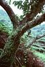 Olympus 53DC - Kodak 500T, 35mm Movie Film, ISO500
