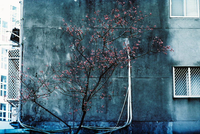 Nikon FT3 - Fuji 500T Vivid, 35mm Movie Film @ ISO1000