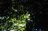 Emerald canopy