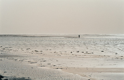 1980_Natur_Falsterbo-11
