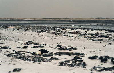 1980_Natur_Falsterbo-25