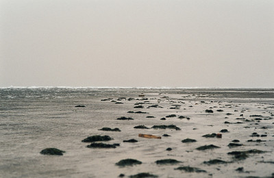 1980_Natur_Falsterbo-14