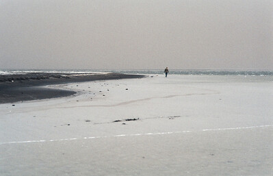 1980_Natur_Falsterbo-28