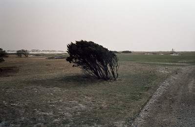 1980_Natur_Falsterbo-04