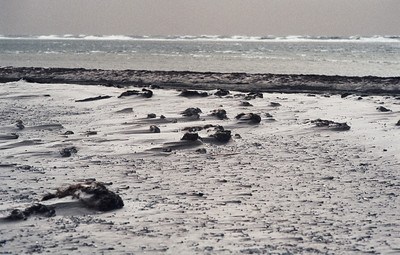 1980_Natur_Falsterbo-26