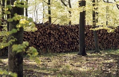 1980_Natur_Skane-50