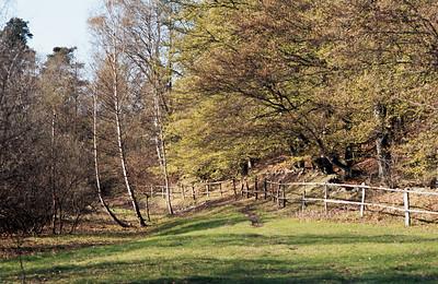 1980_Natur_Skane-38