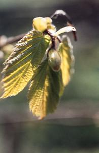1980_Natur_Skane-16
