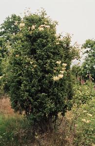 1980_Natur_Skane-53