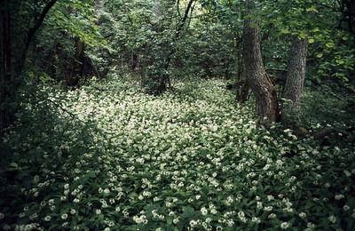 1980_Natur_Angso-03