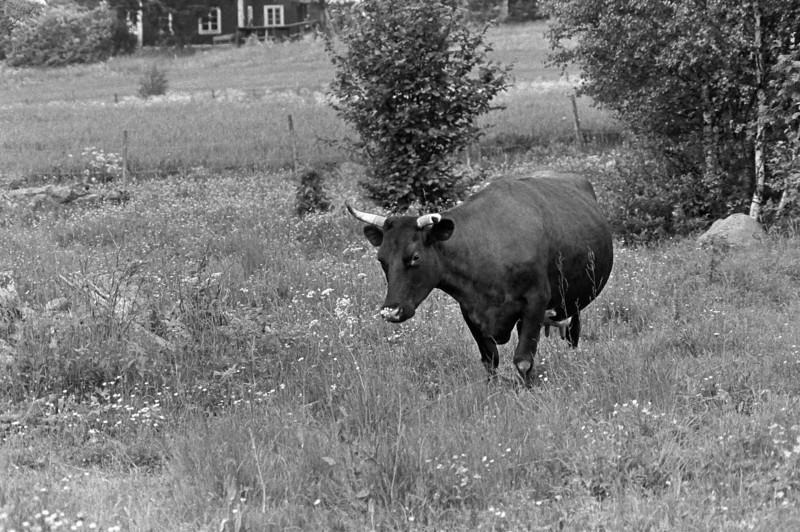 1981 Granshult