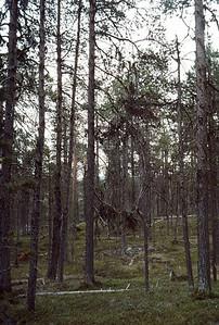 830720_Enare_Lofoten-38