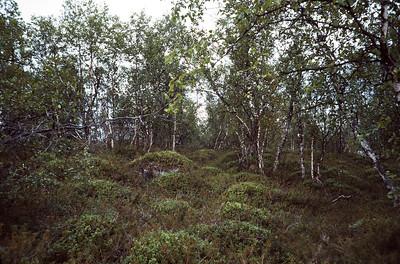830720_Enare_Lofoten-24