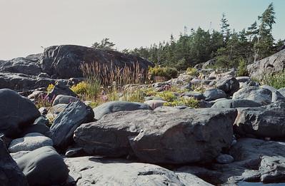 1984_Natur_Pellinge-07