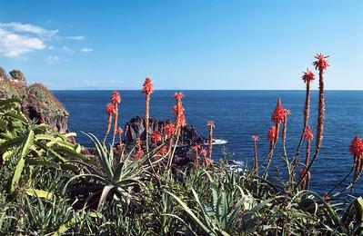 850103_Madeira-05
