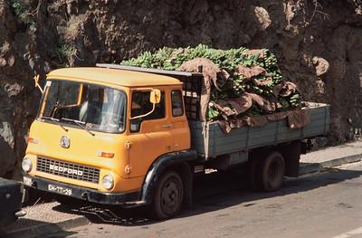 850103_Madeira-73