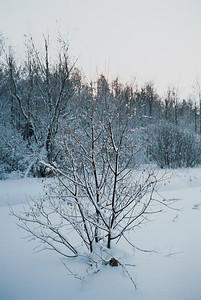 1985_Natur_Tyrestavinter-03