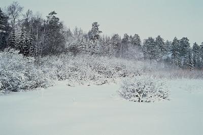 1985_Natur_Tyrestavinter-10