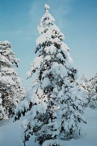 1985_Natur_Tyrestavinter-15