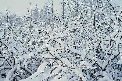 1985_Natur_Tyrestavinter-07