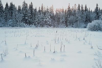 1985_Natur_Tyrestavinter-05
