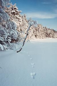 1985_Natur_Tyrestavinter-25