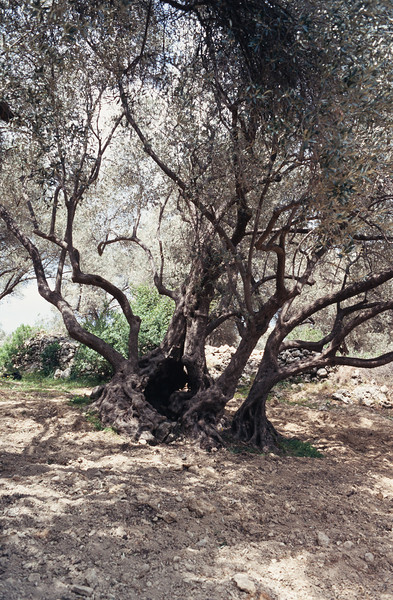 900407_Kreta-081