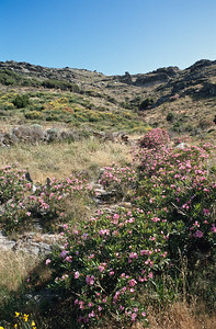 920612_Andros-055